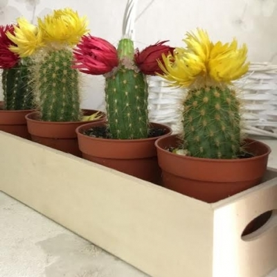 Mini cactus spindle